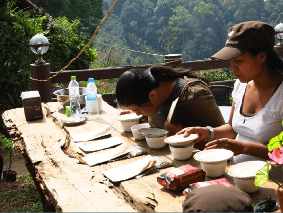 Kaffeeverkostung der neuen Ernte in Peru